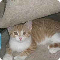 Adopt A Pet :: Ainsley - Bloomsburg, PA