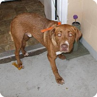 Adopt A Pet :: Jackson - Lewisburg, TN
