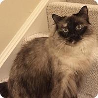 Adopt A Pet :: Quinn - Herndon, VA