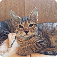 Adopt A Pet :: Brinn (LE) - Little Falls, NJ