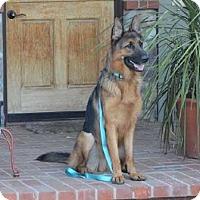 German Shepherd Dog Dog for adoption in Mira Loma, California - Rex
