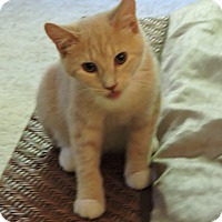 Adopt A Pet :: Rooney - Cincinnati, OH
