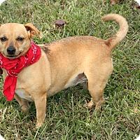 Adopt A Pet :: Chelsea - Harrisburg, PA