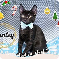 Adopt A Pet :: Stanley - Montclair, CA