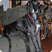 Adopt A Pet :: millie - St. Louis, MO