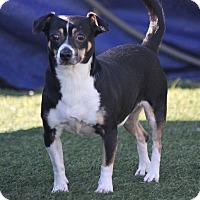 Adopt A Pet :: Tonka - Hollister, CA