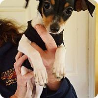 Adopt A Pet :: Toby! - Sacramento, CA