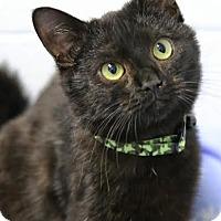 Adopt A Pet :: Kit - Camden, DE