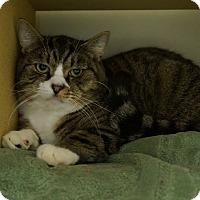 Adopt A Pet :: Rocky Balboa - Salem, NH