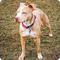 Adopt A Pet :: Sunny - Dayton, OH