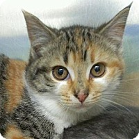 Adopt A Pet :: Mary Tyler Moore - Richboro, PA