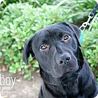 Adopt A Pet :: Alex - Mission Viejo, CA
