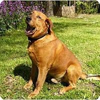 Adopt A Pet :: Fez - Mocksville, NC
