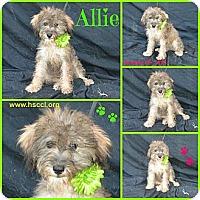 Adopt A Pet :: Allie - Plano, TX