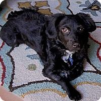 Adopt A Pet :: Moe - San Francisco, CA