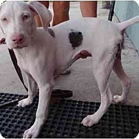 Adopt A Pet :: Sky *Pending Adoption* - Eustis, FL
