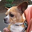 Adopt A Pet :: Hector
