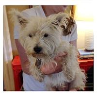 Adopt A Pet :: Conner - Carrollton, TX