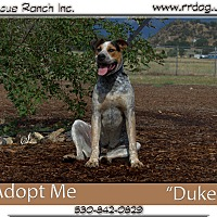 Adopt A Pet :: Duke - Yreka, CA