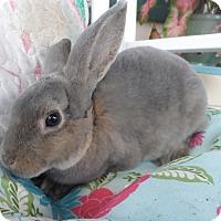 Adopt A Pet :: Doc - Hillside, NJ