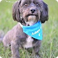 Adopt A Pet :: Kosmo - Fort Valley, GA