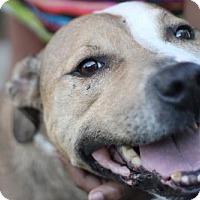 Adopt A Pet :: Dimitri - New Orleans, LA