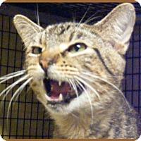 Adopt A Pet :: Ricochet - Milwaukee, WI