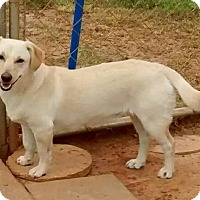 Adopt A Pet :: Blondie - Andalusia, AL