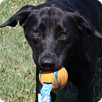 Adopt A Pet :: Josie - Harmony, Glocester, RI