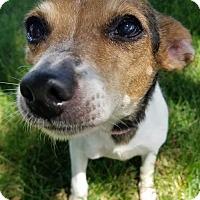Adopt A Pet :: Lucky 4 - Aurora, CO