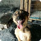 Adopt A Pet :: Kwan