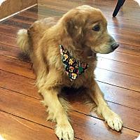 Adopt A Pet :: Jackson - BIRMINGHAM, AL