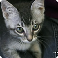 Adopt A Pet :: MaryJane - Republic, WA