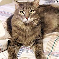 Adopt A Pet :: Jordan - Dallas, TX