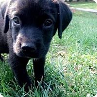 Adopt A Pet :: Salina - Hopewell Junction, NY