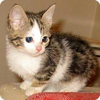 Adopt A Pet :: Pixie - Bedford, VA