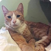 Adopt A Pet :: Bernie - Breinigsville, PA