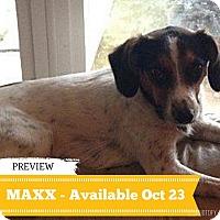 Adopt A Pet :: Maxx - Regina, SK