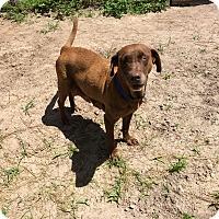Adopt A Pet :: CLEVELAND - Odessa, FL