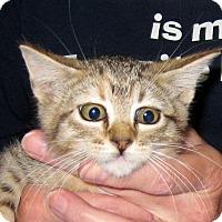 Adopt A Pet :: Rustie - Wharton, TX