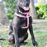 Adopt A Pet :: Rachel - Castro Valley, CA