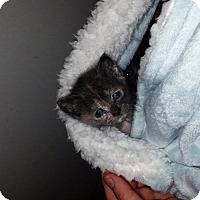Adopt A Pet :: Summer (new) - Tampa, FL