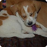 Adopt A Pet :: Joy - Palmyra, WI