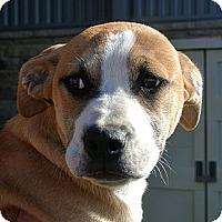 Adopt A Pet :: Max - white settlment, TX