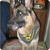 Adopt A Pet :: Noah - Antioch, IL