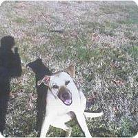 Adopt A Pet :: Charlie - Lexington, TN