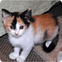 Adopt A Pet :: Cami - Palmdale, CA