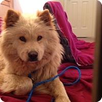 Adopt A Pet :: Goldie - Tucker, GA