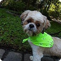 Adopt A Pet :: Puppy - West Deptford, NJ
