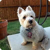 Adopt A Pet :: Gavin - Carrollton, TX